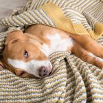 Best Dog Food for Kidney Disease