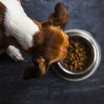 can dogs eat chickpeas
